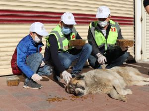 Midyat Belediyesi Sokak Hayvanlarını Unutmadı